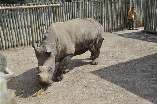 Kenya White Rhinos