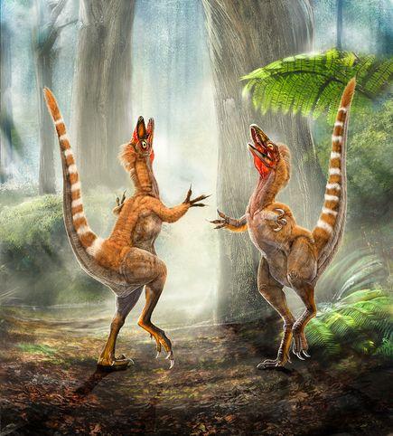 Sinosauropteryx, a feathered dinosaur