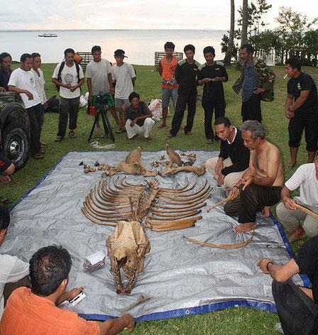 Rhino bones laid out