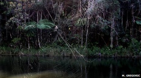 largest spider web