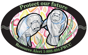 2008 Manatee Decal