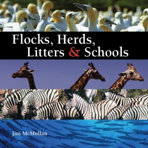 Flocks, Herds, Litters & Schools