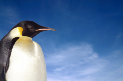 Emperor Penguin Facts For Kids  Penguins Information Emperor Penguin Thesis Statement For An Argumentative Essay also Essay Topics For High School English  Essay Topics For High School English