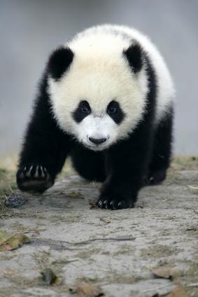 extinction of animal species essay