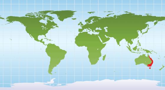 Platypus range map