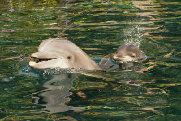 Baby dolphin at Discovery Cove