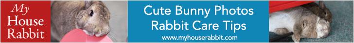 Cute bunny photos at My House Rabbit