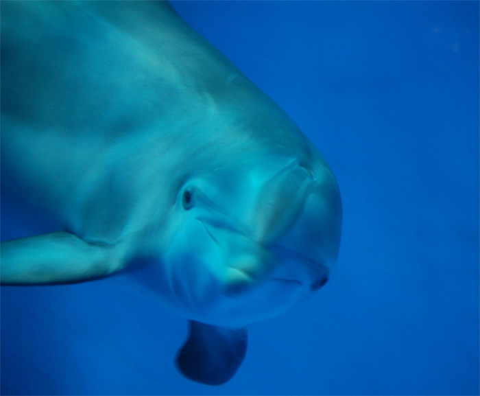 Bottlenose Dolphins - Dolphin Facts - National Dolphin Day ... - photo#48