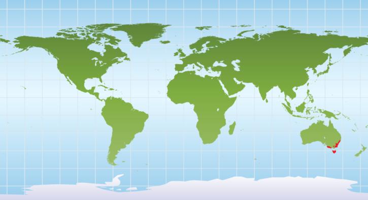 Map showing common wombat range